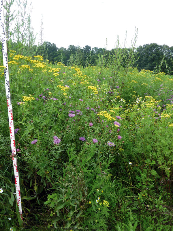 Blühpflanzenmischung statt Mais: So sehen die Felder des Bienstrom-Projekts auf der Schwäbischen Alb ab dem Jahr 2020 aus.